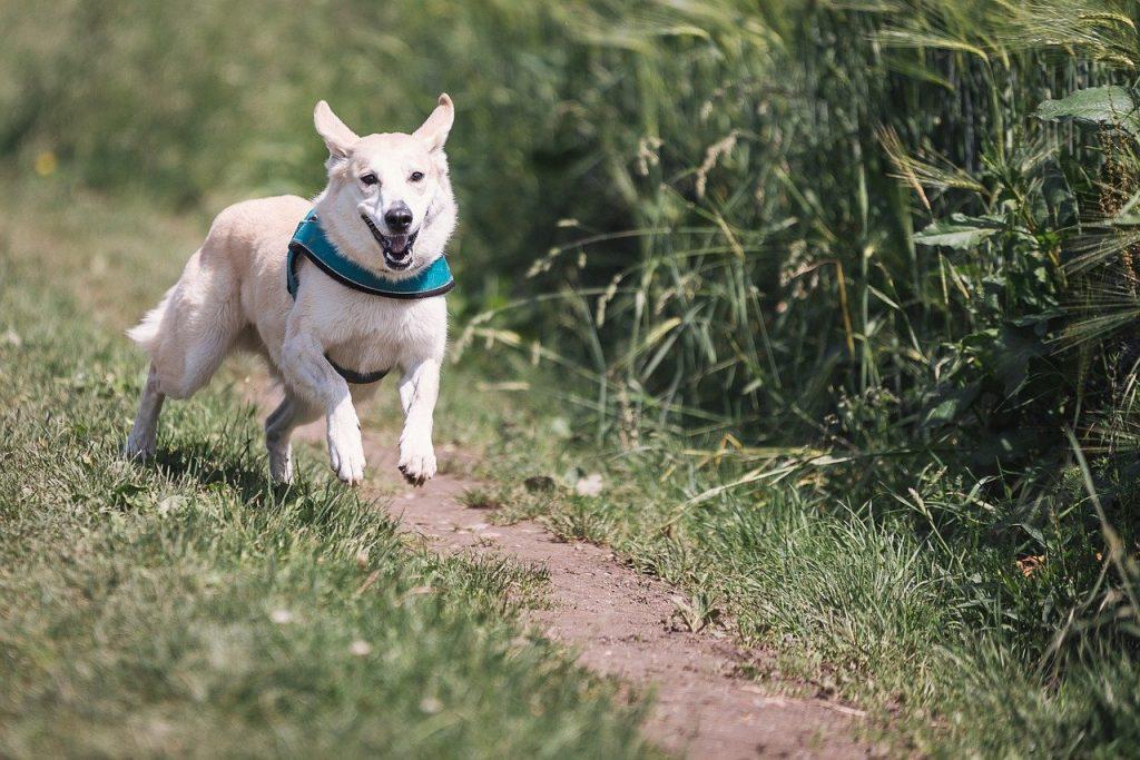 dog, run, fun-644111.jpg